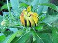 Fleur jaune pendante.jpg
