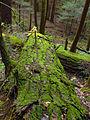 Flickr - Nicholas T - Forrest H. Dutlinger Natural Area (Revisited) (5).jpg