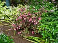 Flickr - brewbooks - Our Garden - May, 2008 (18).jpg