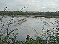 Floods near Egginton - geograph.org.uk - 955048.jpg
