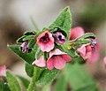 Flora 14 (44615263474).jpg