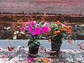 Flores en el canal de Xochimilco.JPG