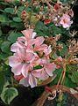 Florid Flowers.jpg
