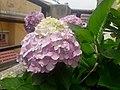 Flower20180523 101039.jpg