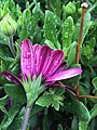 Flower (110258165).jpeg