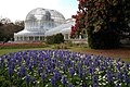 Flower beds, Botanic Gardens, Belfast - geograph.org.uk - 395124.jpg