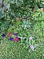 Flowers in Baghdad.jpg