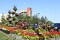 Flowers in Oshawa IMG 2110 (41814908680).jpg