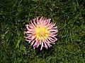 Flowers texture.jpg