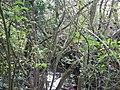 Folly Brook, late October - geograph.org.uk - 592171.jpg