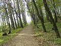Footpath 3 malyi istok.jpg