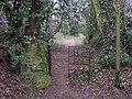 Footpath off Pook Hill near Chiddingfold - geograph.org.uk - 1749158.jpg