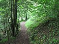 Footpath through the wood above Cockshaw Burn - geograph.org.uk - 822146.jpg