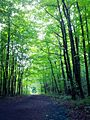 Forêt Fernand-Séguin (7332213152).jpg