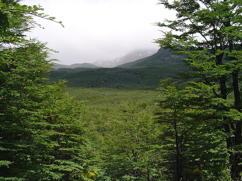 Fichier:Forêt Magellanique Décidue.jpg