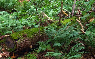 Forest green - Ferns in a forest
