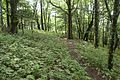 Forest in Doshi 10.jpg