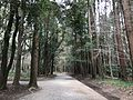 Forest in Miyazaki Shrine 5.jpg