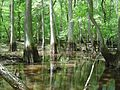 Forested wetland (7508455504).jpg