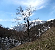 Forests of Armenia2.jpg
