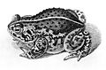 Frog from Roesel von Rosenhof; 1758 Wellcome L0001710.jpg