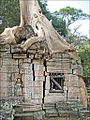 Fromager dans Preah Khan (Angkor) (6801176438).jpg