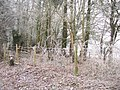 Frosty fence - geograph.org.uk - 1123026.jpg