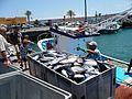 Fuerteventura Fischerboot im Hafen Fisch 01.jpg