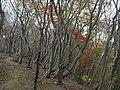 Fujiwaracho Yamaguchi, Inabe, Mie Prefecture 511-0524, Japan - panoramio (6).jpg