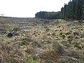 Fuller Sike near East Kielder - geograph.org.uk - 1272002.jpg