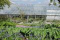Göteborgs botaniska trädgård-IMG 2224.jpg