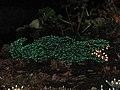 Garden d'Lights 2008 at the Bellevue Botanical Garden, img050.jpg