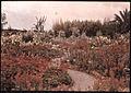 Garden in Madeira, by Sarah Angelina Acland, c.1910 (3).jpg