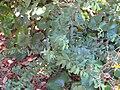 Gardenology.org-IMG 0397 rbgs10dec.jpg