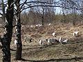 Geplantes Naturschutzgebiet Binnenduenen Nordoe DSC01758.JPG