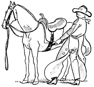 Girth (tack) - Tightening the girth, or cinch, of a western saddle.