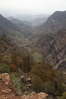 Djibouti-Wildlife-Goda Mountains - National Park of Forêt du Day