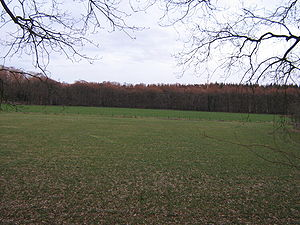 Gooi - Gooi landscape: Pasture land surrounded by woods