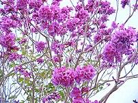 Flora típica do Agreste pernambucano