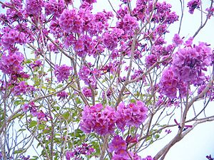 Gravatá - Largest producer of temperate flowers in the Northeast