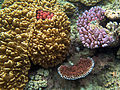 Great Barrier Reef 015 (5390533959).jpg