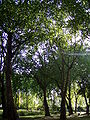 Green Space by Euston Station 2.jpg