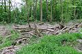Grosses Torfmoor Wald Totholz SO.jpg