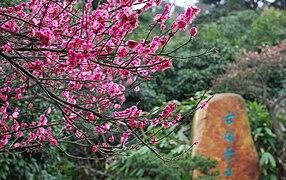 Chinese gardenWikipedia