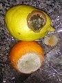 HK 生果 Fruits 發霉 Mold 柑桔 orange 梨 Pear Feb-2018 Lnv2 02.jpg