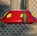 HUMMINGBIRD (8107260073).jpg
