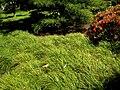 Hakone Gardens, Saratoga, CA - IMG 9164.JPG