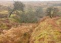Hangman's Pit, Holne Moor.jpg