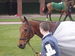 Hardy Eustace Irish-bred Thoroughbred racehorse