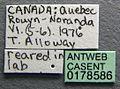 Harpagoxenus canadensis casent0178586 label 1.jpg